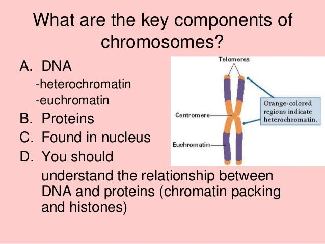 dna chromatin and chromosomes relationship questions