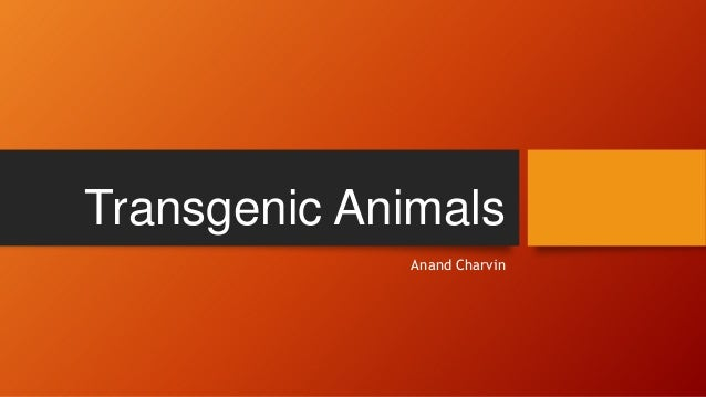 Transgenic Animals Anand Charvin