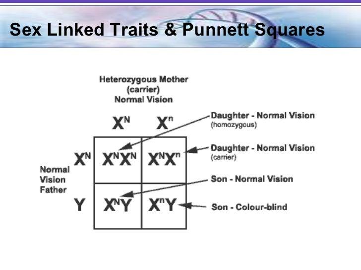 linked problem punnett sex square