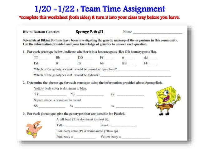 spongebob punnett square worksheet worksheets for school roostanama. Black Bedroom Furniture Sets. Home Design Ideas