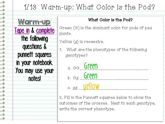 Introduction to Genetics PowerPoint – Introduction to Genetics Worksheet