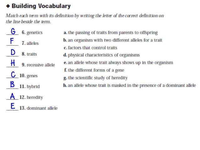Genetics worksheet section a vocabulary answer key