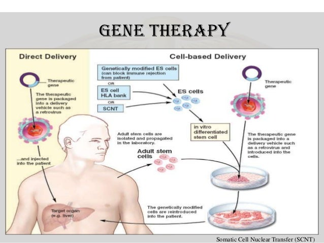 somatic cell gene therapy essay Start studying genetic ethical issues gene therapy learn vocabulary, terms, and more with flashcards, games somatic cell germline enhancement therapy.