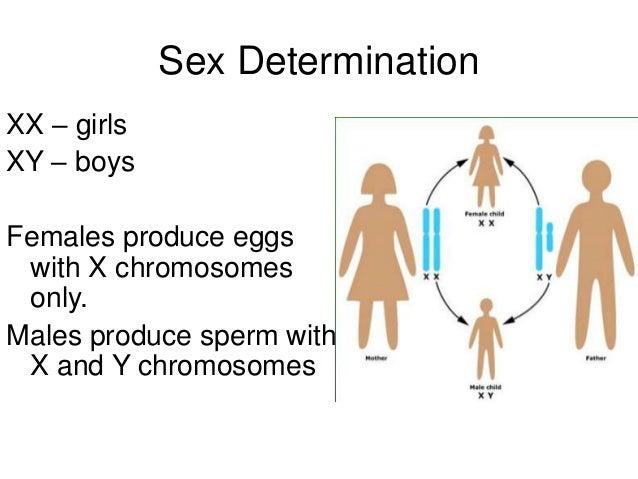 Genetics and Heredity