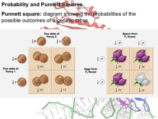 Genetic Basis Of Inheritance
