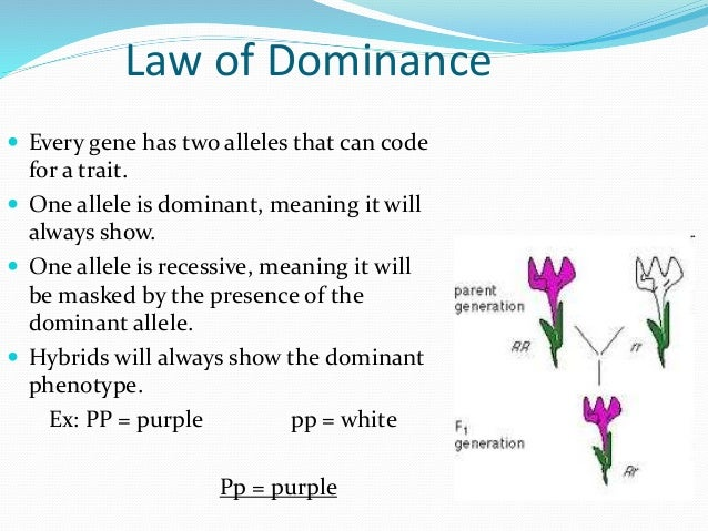 law of dominance - photo #4