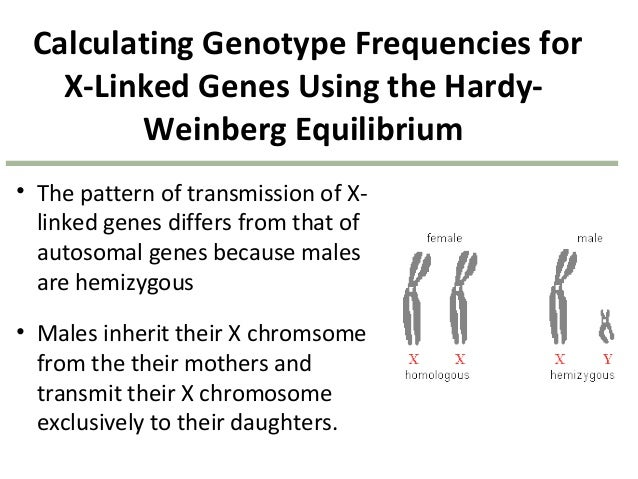 gene frequencies and the hardy weinberg As stated in the introduction to population genetics, the hardy-weinberg law states that under the following conditions both phenotypic and allelic frequencies remain constant from generation to generation in sexually reproducing populations, a condition known as hardy-weinberg equilibrium.