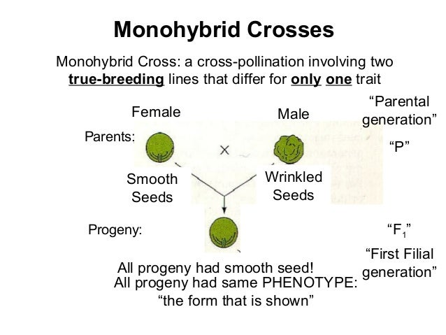 what is the definition of monohybrid