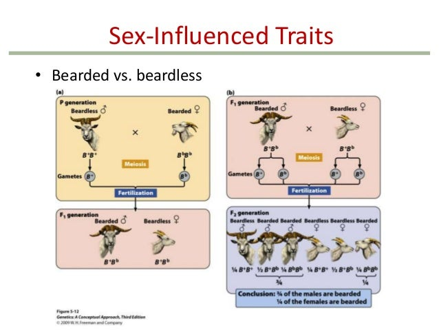 sex influenced traits and sex limited traits in Tulsa