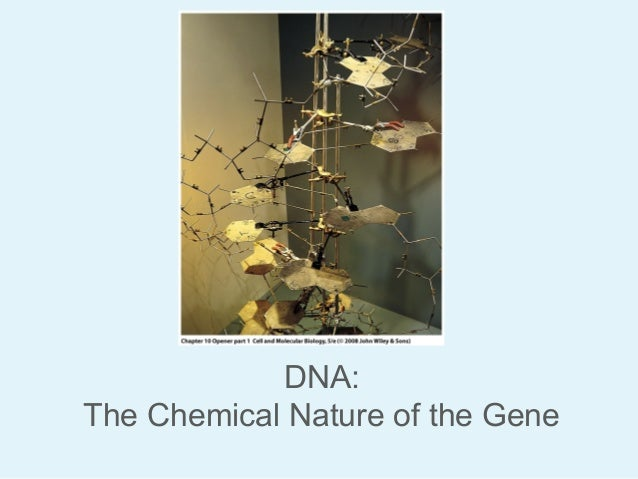 DNA: The Chemical Nature of the Gene