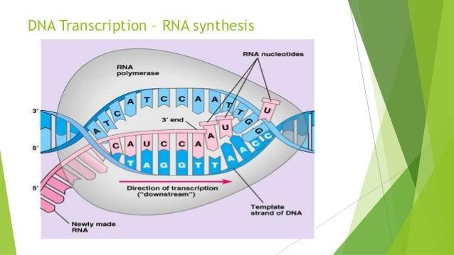 Genetics Secondary Bio
