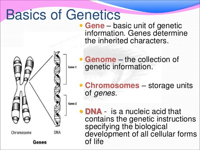 gender and genetic mutations essay List of disadvantages of human genetic engineering 1 it is surrounded with moral issues the initial reaction of people to the practice of genetic engineering is.