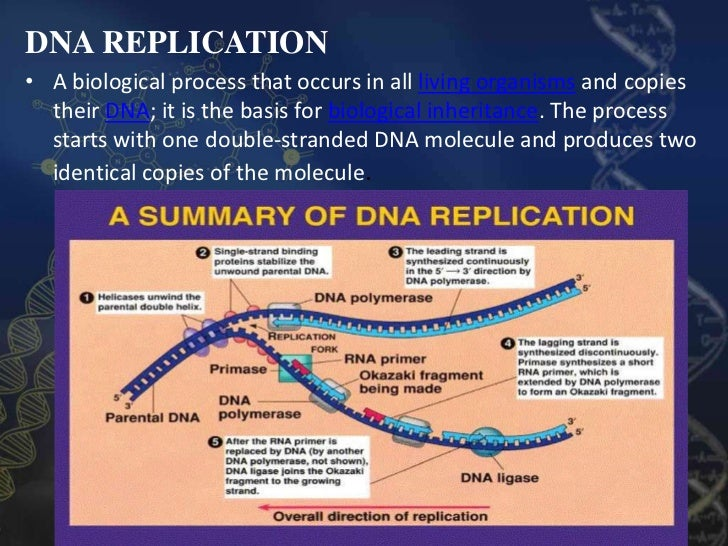 Dna Structure Replication And Manipulation