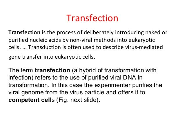 transformation transfection transduction Genetics of bacteria