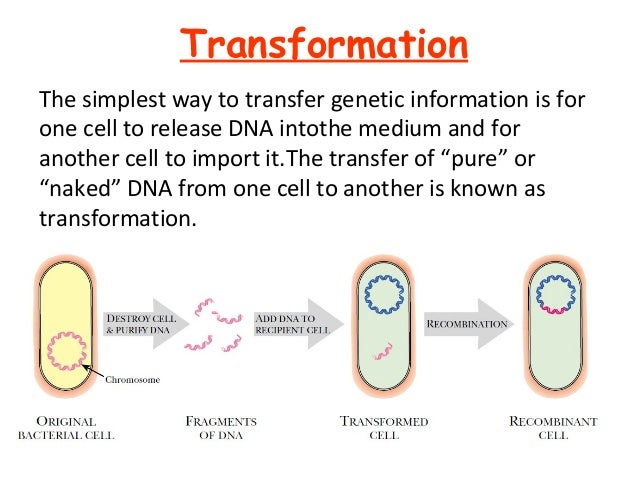 transformation genetics How to use transformation in a sentence example sentences with the word transformation transformation example sentences.