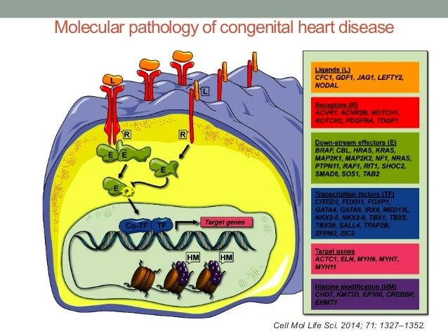 Molecular pathology of congenital heart disease  Cell Mol Life Sci. 2014; 71: 1327–1352.