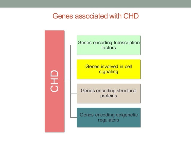 Genes associated with CHD  CHD  Genes encoding transcription  factors  Genes involved in cell  signaling  Genes encoding s...