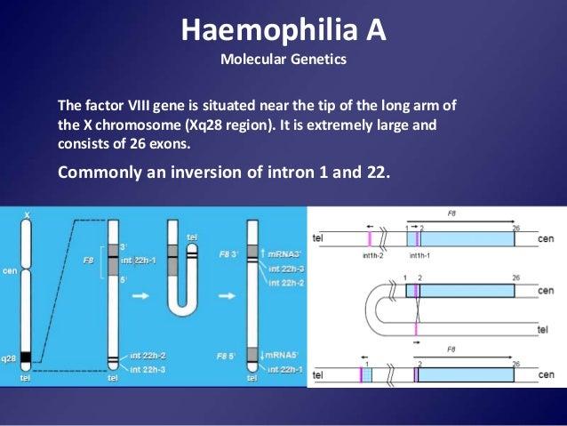 hemophilia genetics