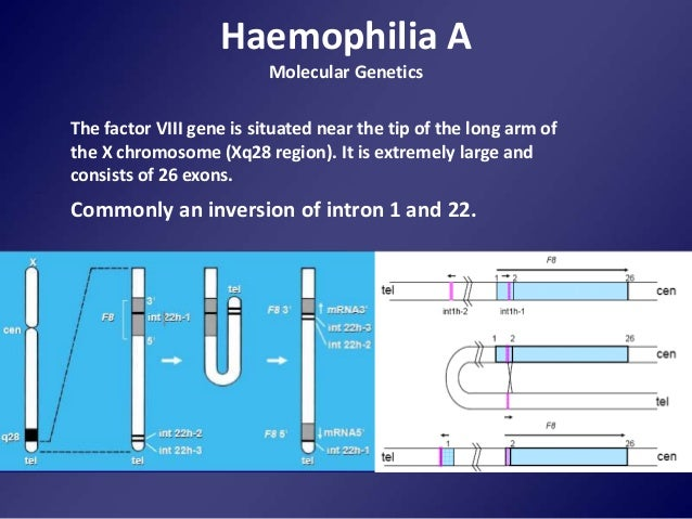 the types and characteristics of hemophilia manitoba a genetic disorder Webmd explains how to spot symptoms of meningitis, a disease that can be fatal.
