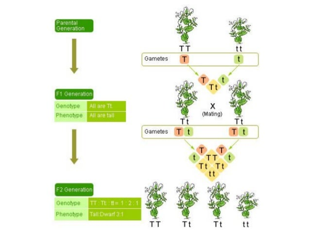 B4FA 2012 Uganda: Genetics, plant breeding and agriculture ...