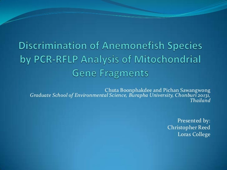 Discrimination of Anemonefish Species by PCR-RFLP Analysis of Mitochondrial Gene Fragments<br />ChutaBoonphakdee and Picha...