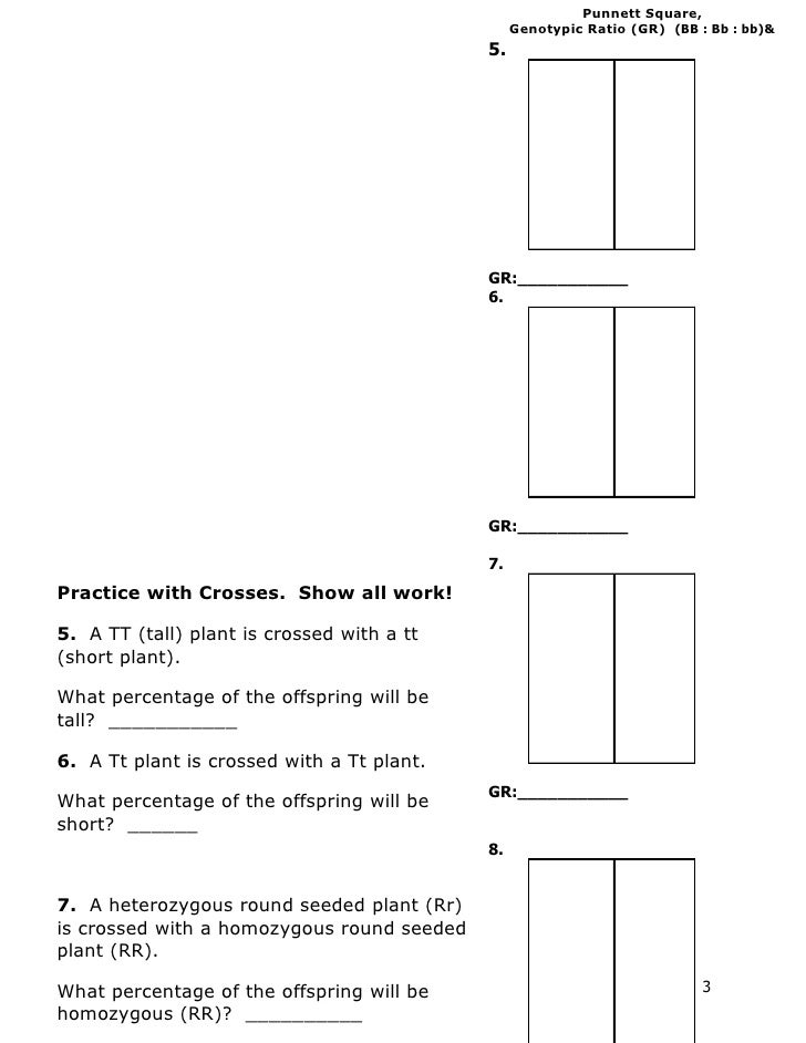 Genetics Practice Problems – Punnett Square Practice Problems Worksheet