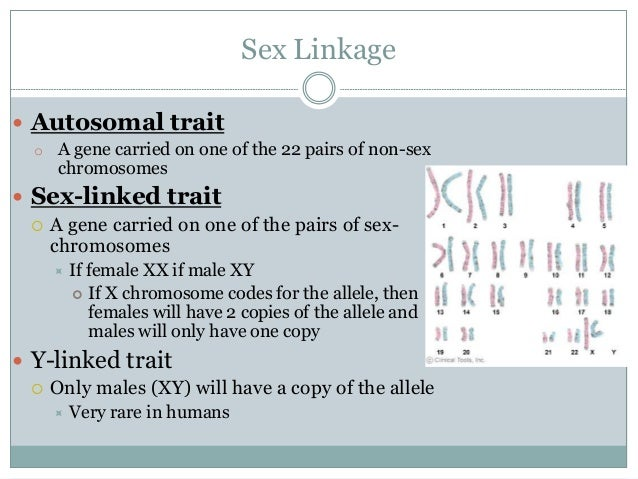 Autosomal Vs Sex Chromosomes