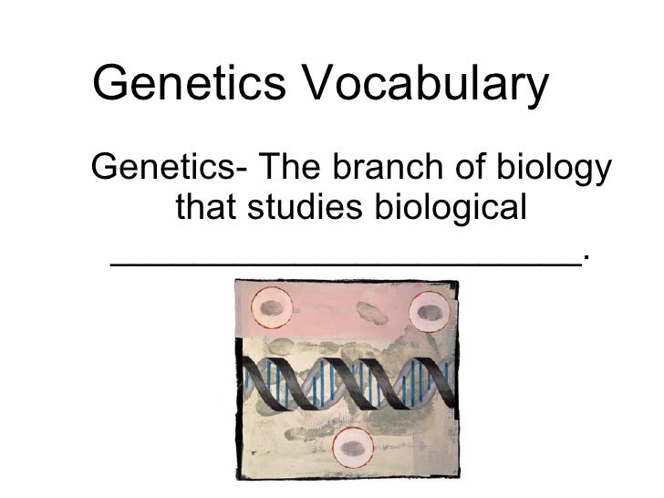 Genetics Vocabulary Genetics- The branch of biology that studies biological _______________________.