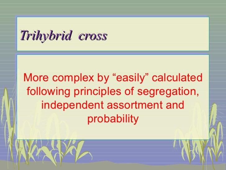 """Trihybrid crossTrihybrid crossMore complex by """"easily"""" calculatedMore complex by """"easily"""" calculatedfollowing principles o..."""