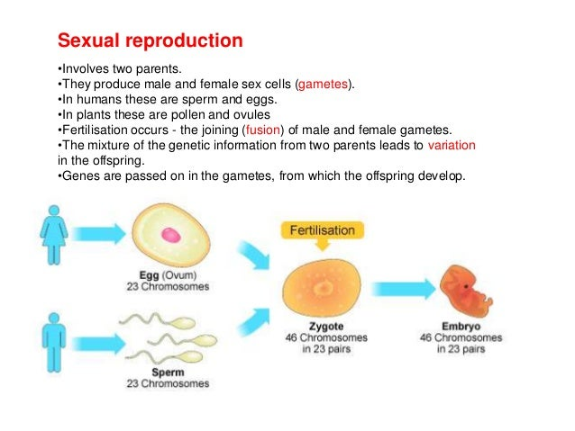 Sources of variation in asexual reproduction of the genetic information