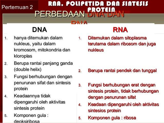 FUNGSI DNA DAN RNA EBOOK