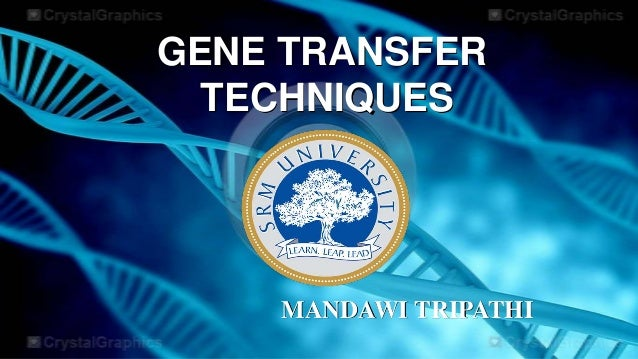 GENE TRANSFER TECHNIQUES  MANDAWI TRIPATHI