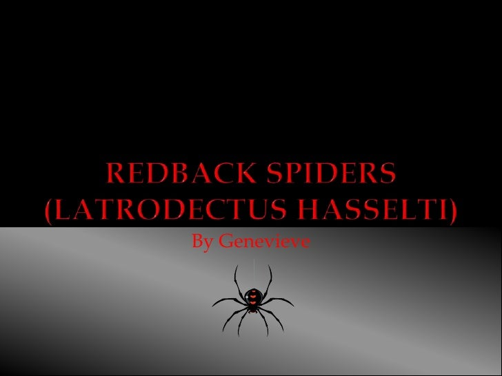 Redback Spiders(Latrodectus hasselti) <br />By Genevieve<br />