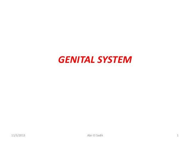 GENITAL SYSTEM  11/3/2013  Abir El Sadik  1