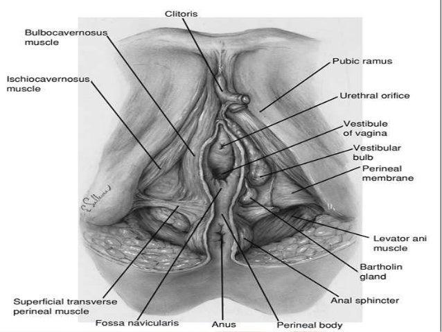 Tear near the clitoris photos 123