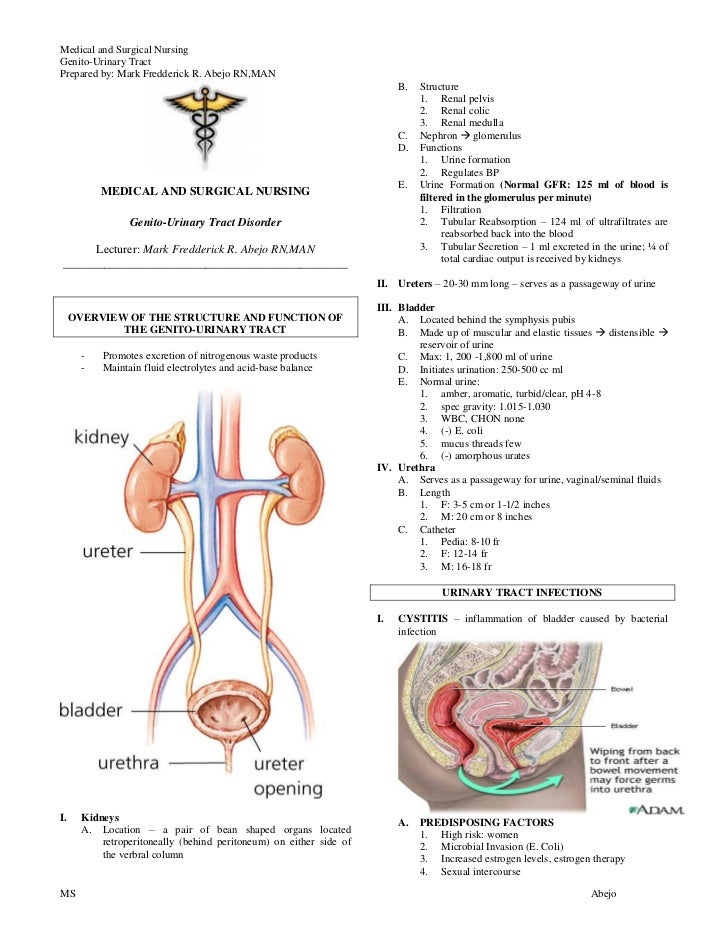 the renal system at a glance pdf