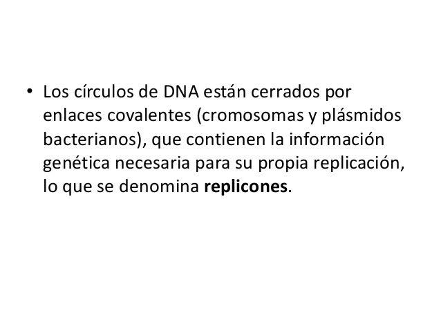 • Los círculos de DNA están cerrados por enlaces covalentes (cromosomas y plásmidos bacterianos), que contienen la informa...