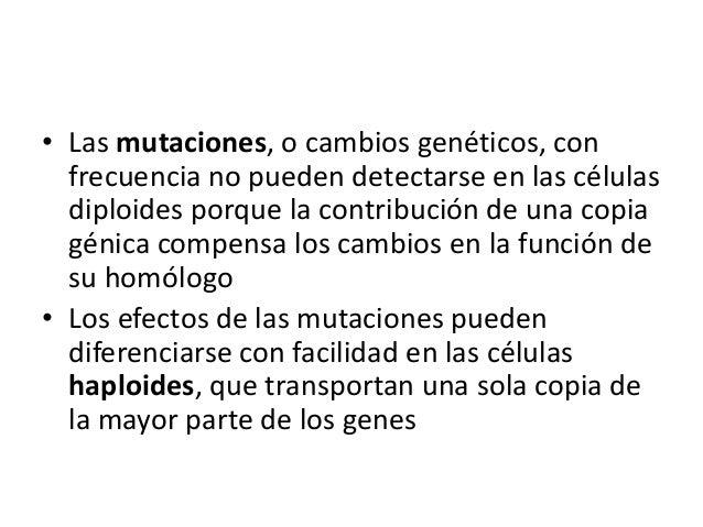 • Las mutaciones, o cambios genéticos, con frecuencia no pueden detectarse en las células diploides porque la contribución...