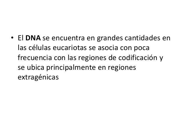 • El DNA se encuentra en grandes cantidades en las células eucariotas se asocia con poca frecuencia con las regiones de co...