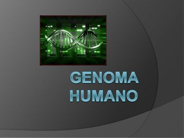 Introduccion  INMEGEN se propuso crear un sistema para comprender mejor la arquitectura genética surgida del mestizaje de...