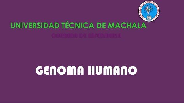 UNIVERSIDAD TÉCNICA DE MACHALA CARRERA DE ENFERMERIA  GENOMA HUMANO