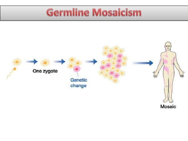 genetic mosaicism - photo #4