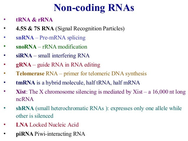 an analysis of long non coding rnas Transcriptome analysis allowed the identification of new long noncoding rnas  differentially expressed during murine myoblast differentiation these transcripts .