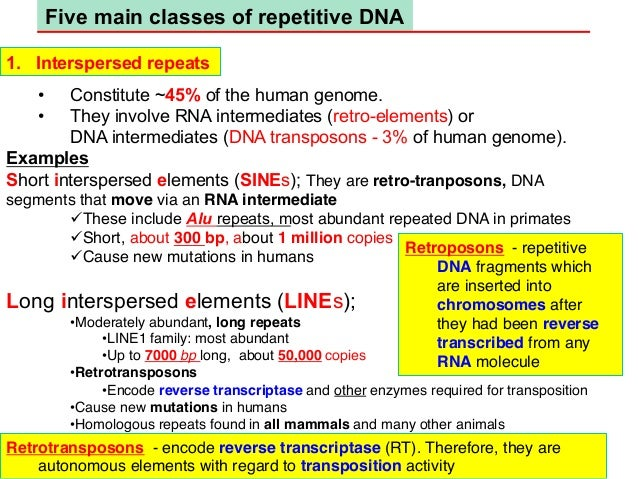rna and human genome essay Genomes fuses the fresh outlook of the new genomics with the traditional approach to gene expression to provide an up-to-date understanding of the role of the genome as the blueprint for life.