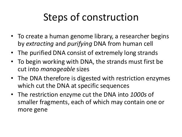 genomic library construction - photo #38