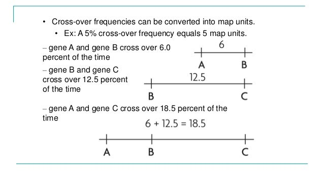 Genotyping, linkage mapping and binary data on test cross, gene mapping activity, pedigree chart, monohybrid cross, wild type, punnett square, chromosome map units, dihybrid cross, reciprocal cross, map scale equivalent units, genetic screen,