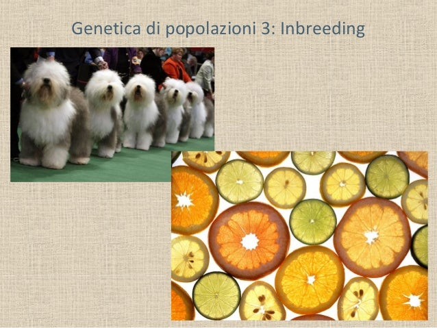 Genetica di popolazioni 3: Inbreeding