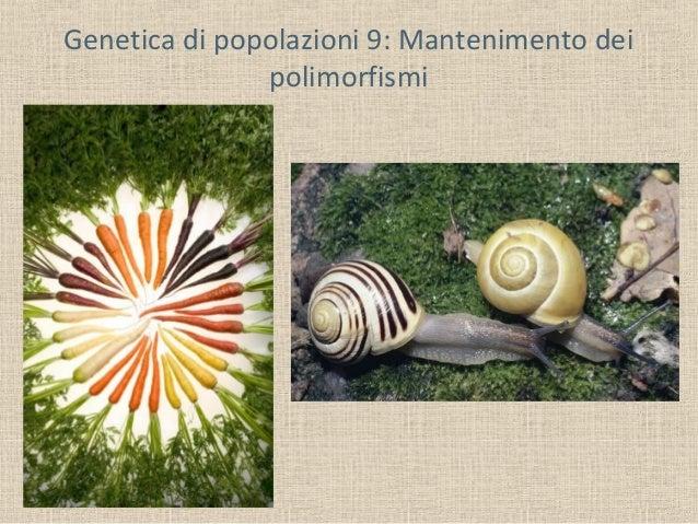 Genetica di popolazioni 9: Mantenimento dei polimorfismi