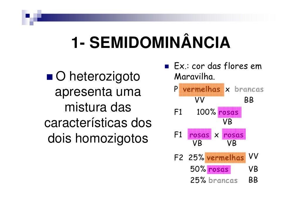 1- SEMIDOMINÂNCIA                      Ex.: cor das flores em  O heterozigoto      Maravilha.  apresenta uma       P verme...