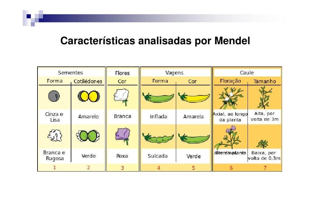 Características analisadas por Mendel